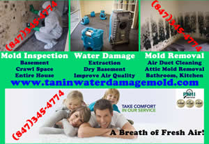 Water Damage, Mold Removal, Carpet Cleaning Northbrook